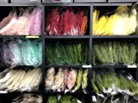 4F:色とりどり!カスミ草